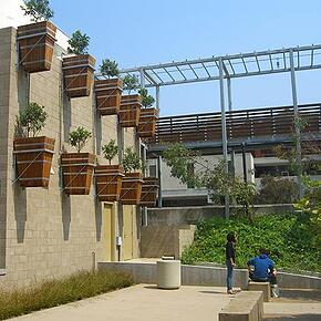 muir-UCSD-Custom-Redwood-Planters-004