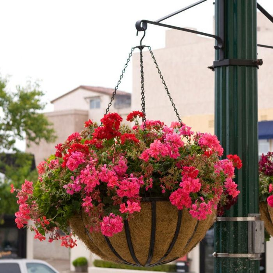 English Garden Flat Steel Hanging Basket