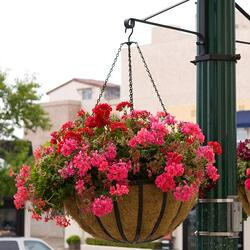 English Garden Flat Steel Hanging Basket